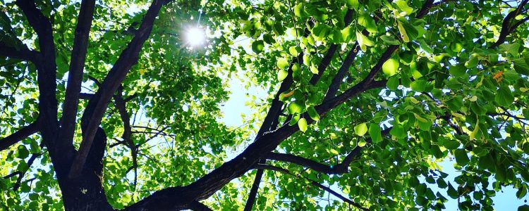 RETOUR d'ATELIER – Méditation au parc Blandan – L'ÉCOUTE DU COEUR